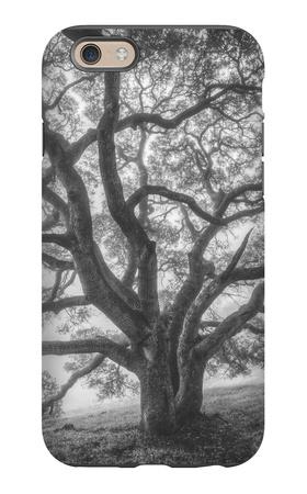 Wild Oak Tree in Black and White Portait, Petaluma, California iPhone 6s Case by Vincent James