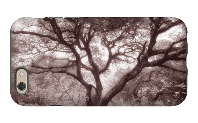 Old Oak Tree in the Oakland Hills iPhone 6s Case by Vincent James