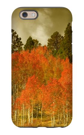 Portrait of Aspens in Autumn iPhone 6s Case by Vincent James