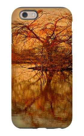 Golden Tree iPhone 6 Case by Philippe Sainte-Laudy