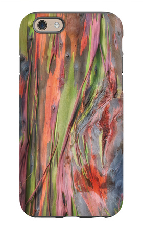 Rainbow Eucalyptus Detail, Kauai iPhone 6 Case by Vincent James