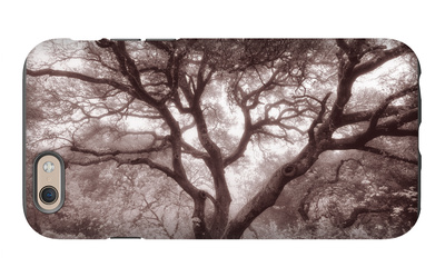 Old Oak Tree in the Oakland Hills iPhone 6 Case by Vincent James