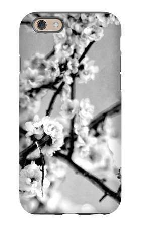 Black and White Blossoms I iPhone 6 Case by Susan Bryant