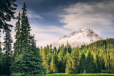 Afternoon Sun at Mount Hood Meadow, Government Camp, Oregon Photographic Print by Vincent James
