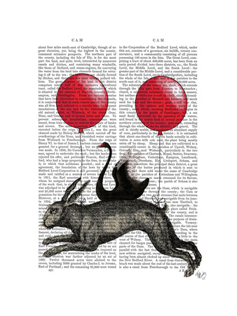 The Hare Ship Prints by  Fab Funky