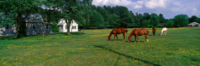 Panoramic View of Horses Grazing in Springtime Field, Eastern Shore, Md Photographic Print by Panoramic Images