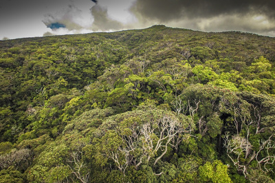 Aerial over Ohia Forest Canopy, Kamakou Preserve of Nature Conservancy, Molokai, Hawaii Photographic Print by Richard Cooke III