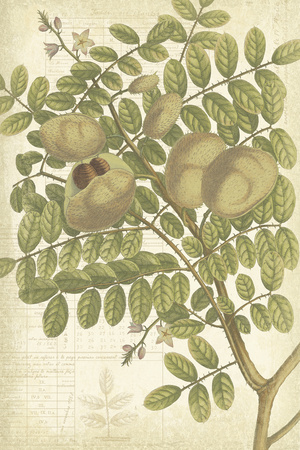 Botany Sketchbook I Giclee Print by Maria Mendez