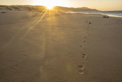 Sandy Shore at Mo'Omomi Beach, Sunset, Nature Conservancy, Molokai, Hawaii Photographic Print by Richard Cooke III
