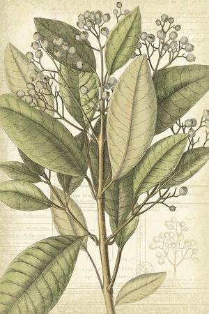 Botany Sketchbook II Giclee Print by Maria Mendez