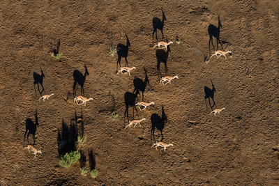 Aerial View of Deer, Sossusvlei, Namib Desert, Namib-Naukluft National Park, Namibia Photographic Print by Green Light Collection