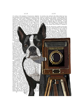 Boston Terrier Photographer Posters by  Fab Funky