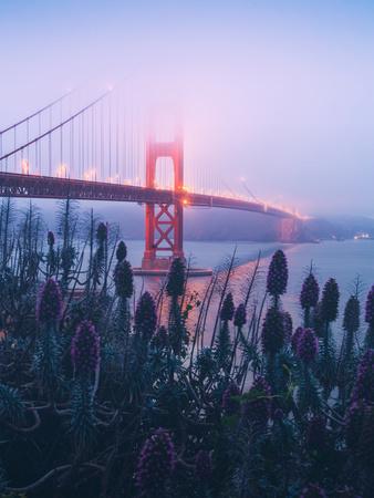 Foggy Golden Gate Bridge and Wildflowers, San Francisco Kunst op metaal van Vincent James