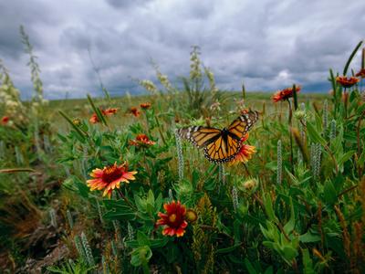 A Monarch Butterfly Lands on Wildflowers Lámina en metal