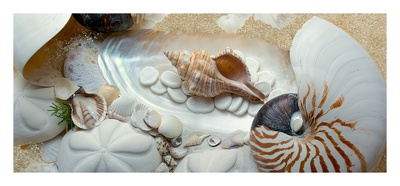Island Tide Pool No. 1 Prints by Alan Blaustein