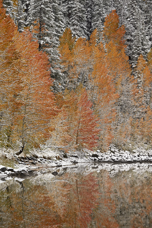 Orange Aspens in the Fall Among Evergreens Covered with Snow at a Lake Photographic Print by James Hager