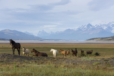 Los Glaciares National Park, Patagonia, Argentina Photographic Print by Peter Groenendijk