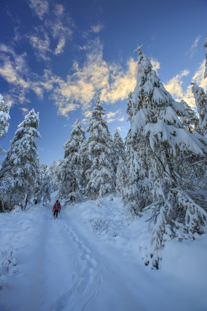 Hiker on Snowshoes Ventures in Snowy Woods Photographic Print by Roberto Moiola