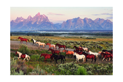 Wild Horses and Sunrise Prints by  Lantern Press