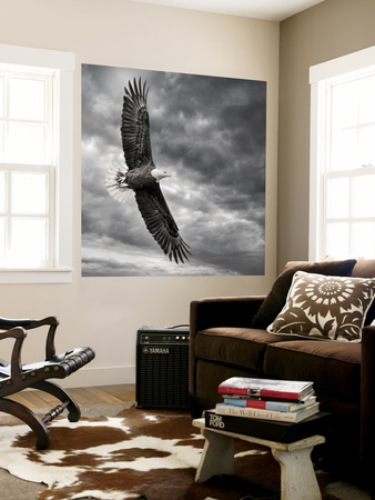Eagle in Flight Wall Mural by  PHBurchett