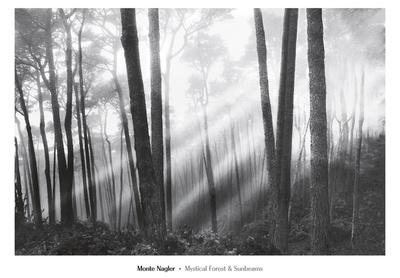 Mystical Forest & Sunbeams Prints by Monte Nagler