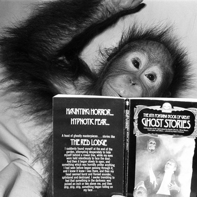 An Orangutan reading ghost stories Photographic Print by  Staff