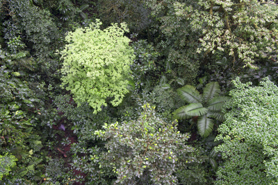 A Birds-Eye-View of Different Shades of Green from Trees Making Up the Forest Photographic Print by Stacy Bass