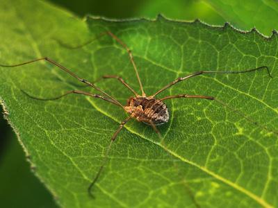 Arachnid long leg spider in New York Photographic Print by Elizabeth Oldfield