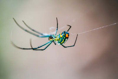 Arachnid colorful spider in Florida Photographic Print by Michael Stultz
