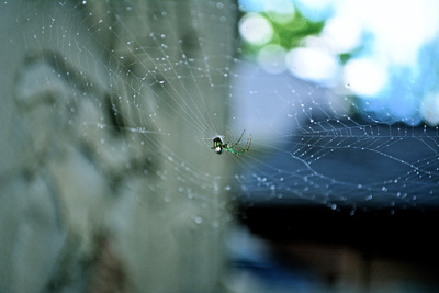Arachnid spider with web in Wisconsin Photographic Print by Riley Marinelli