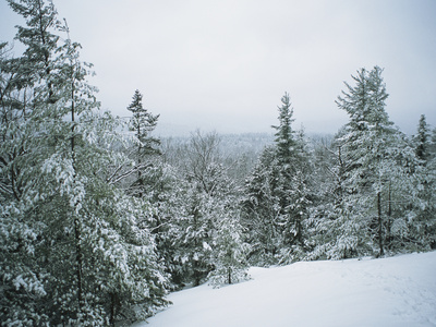 Snow-Covered Evergreens in a Winter Landscape Kunst på metal af Bill Curtsinger