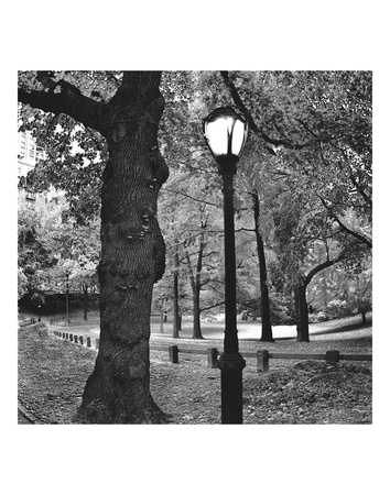 A Light in Central Park Prints by Erin Clark