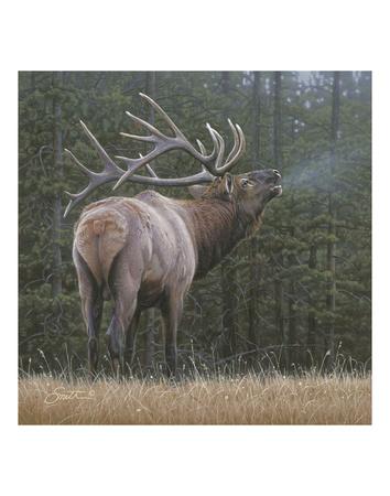Broken Silence - Elk Prints by Daniel Smith