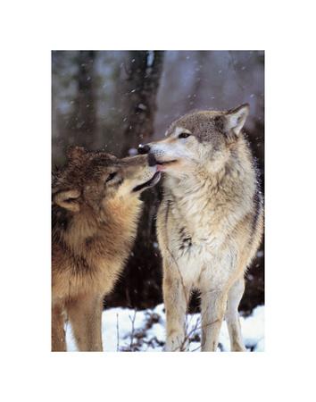 Interludio boreale, Canada Stampe di Art Wolfe
