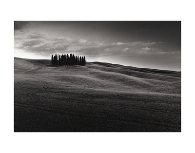 Cypresses and Rolling Hills Prints by Michael Hudson