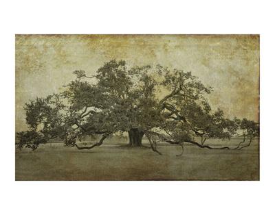 Sugarmill Oak, Louisiana Poster von William Guion
