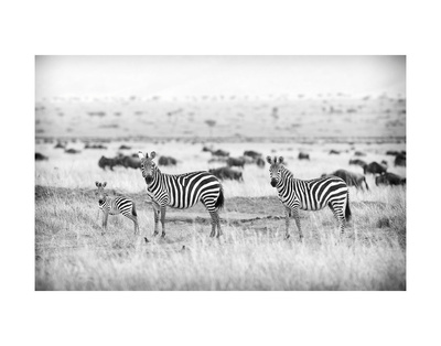 Stripes Posters by Mark Bridger