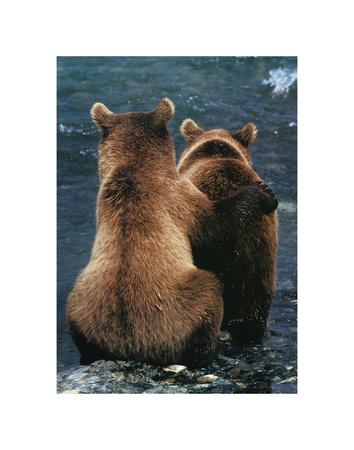 Dos cachorros de oso Pósters por Art Wolfe
