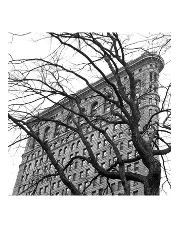 Flatiron with Tree (b/w) (detail) Posters by Erin Clark