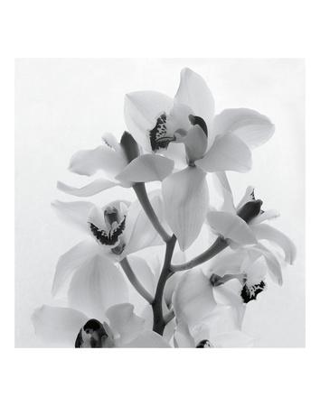 Orchid Spray I Prints by Tom Artin