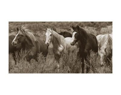 Pasture Pals Prints by Barry Hart