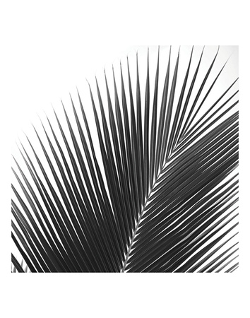 Palms 14 (detail) Print by Jamie Kingham