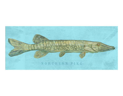 Northern Pike Posters by John Golden