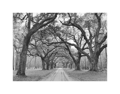 Oak Arches Posters by Jim Morris