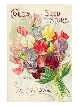 Cole's Seed Store Pella Iowa Prints