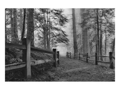 Schwartz - Down the Misty Path Poster by Don Schwartz