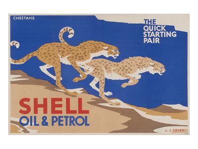 Shell Oil & Petrol Cheetahs Print