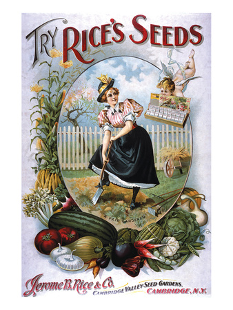 Try Rice's Seeds Cambridge Posters