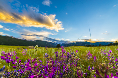 Indian Paintbrush Flowers Colorado Landscape Photographic Print by Kris Wiktor