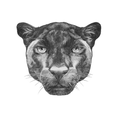 Portrait of Panther. Hand Drawn Illustration. Posters by  victoria_novak